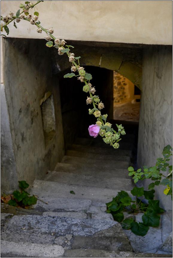 Passage aux roses