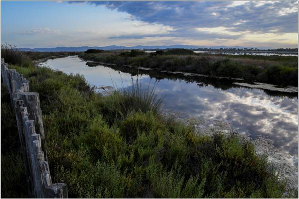 Le canal au marais