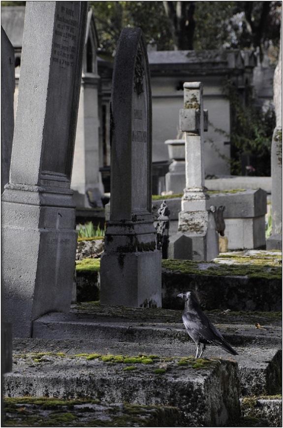 Oiseaux de mauvaise augure