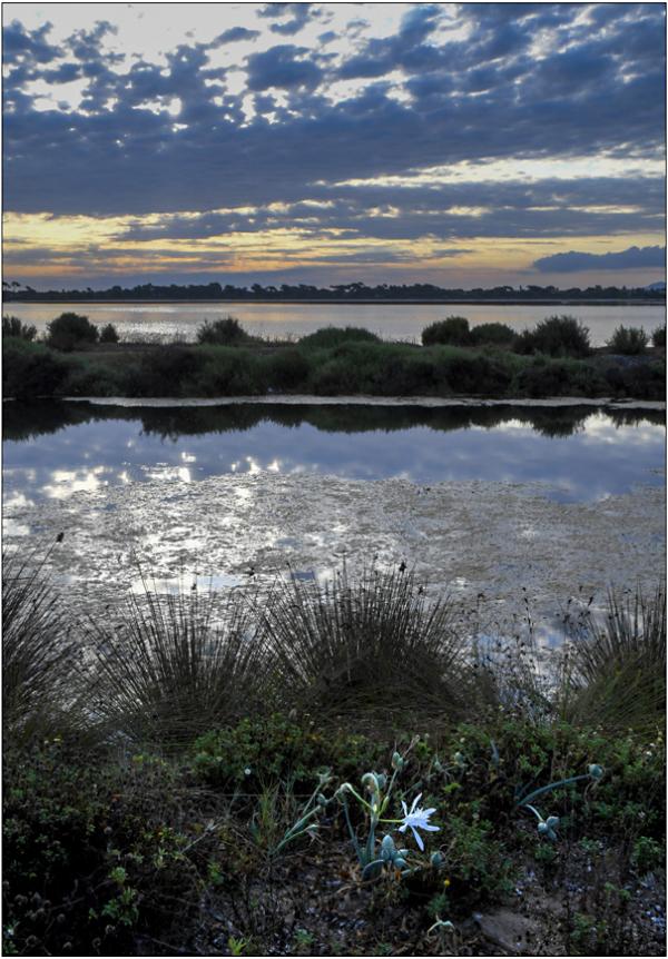 Au bord des marais