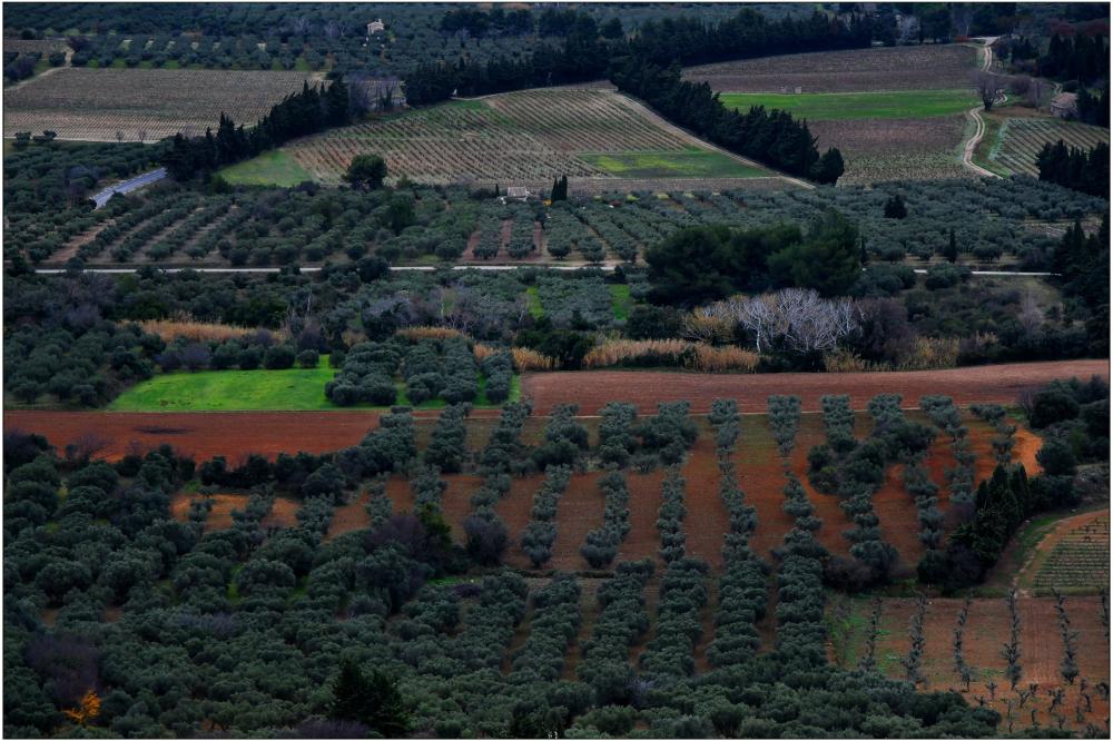 Géométrie d'oliviers