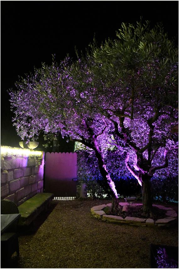 Un soir sous l'olivier