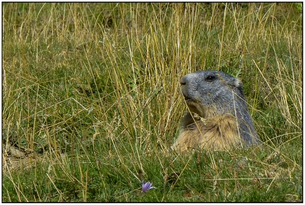 Revoir les marmotes