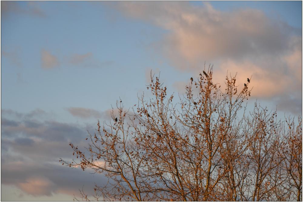 Dans les branches dorées