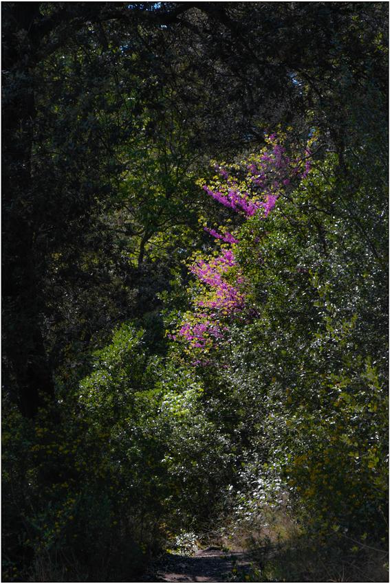 Sentier printanier
