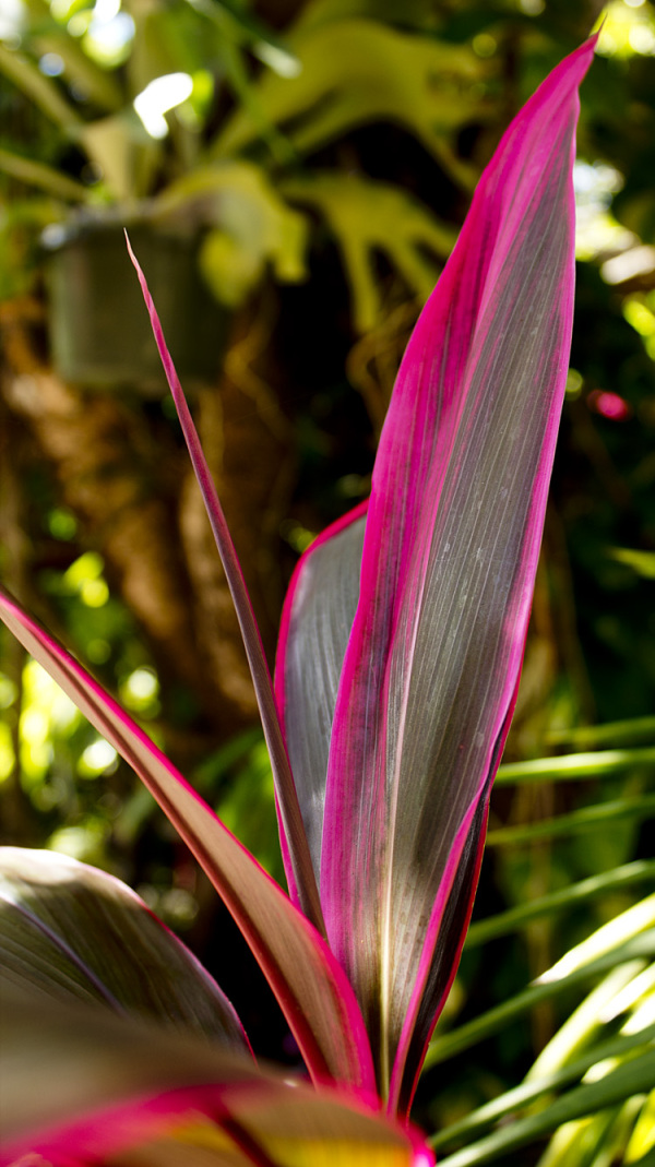 Purple Palm