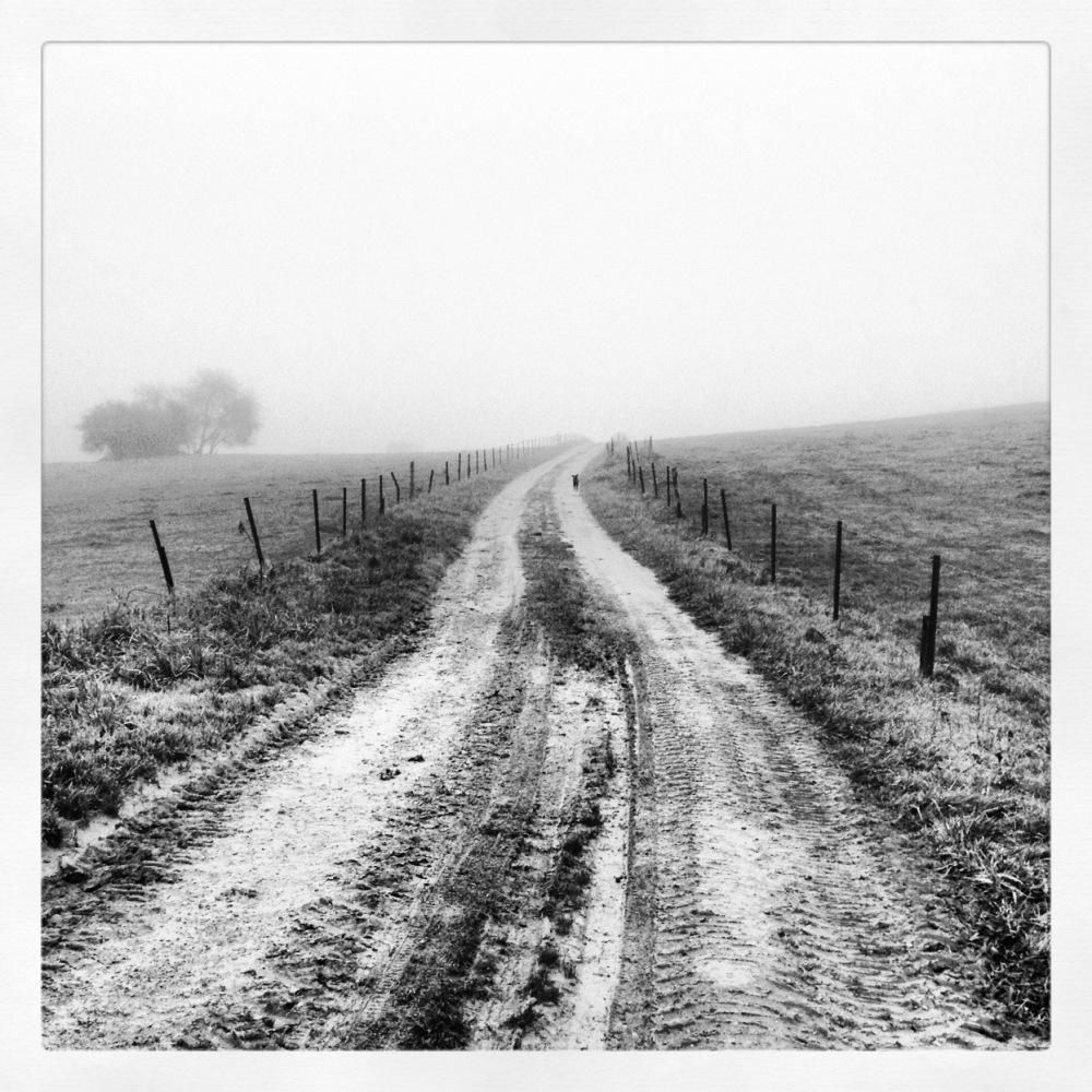 Le chemin des bois.