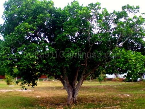 Play Tree :)