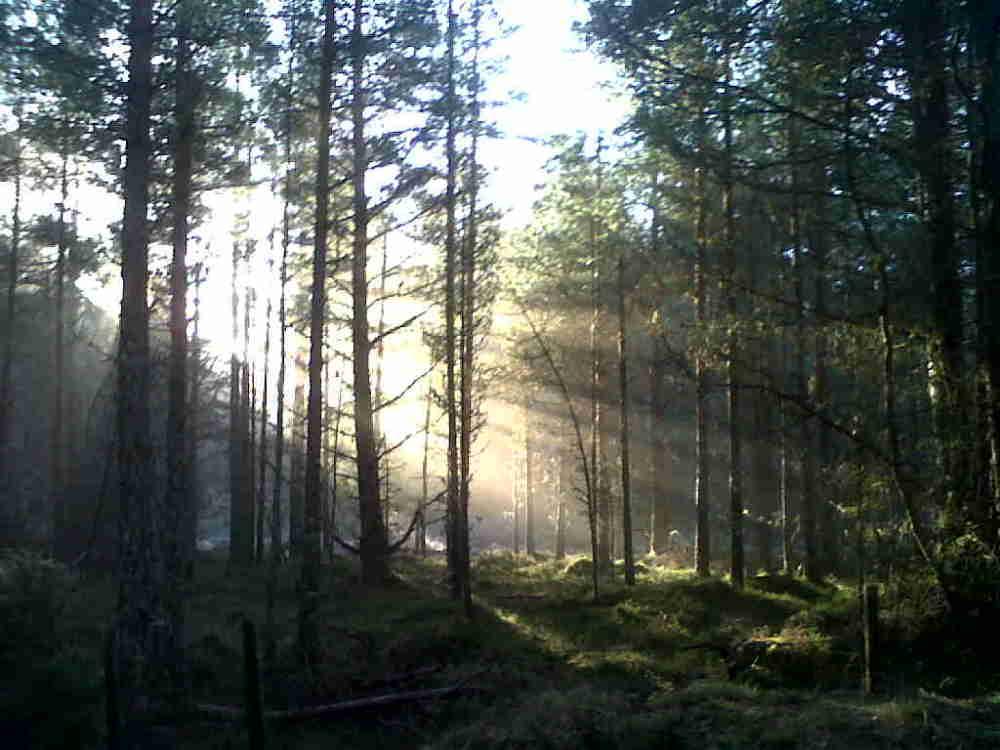 Scottish sunshine