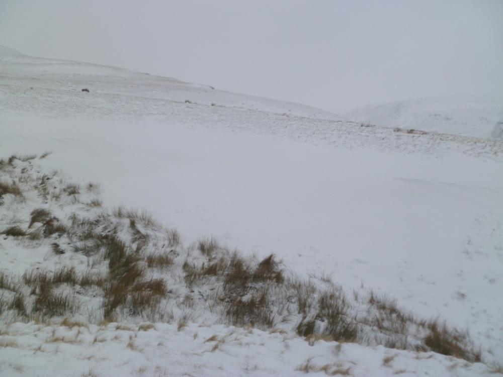 grass+snow