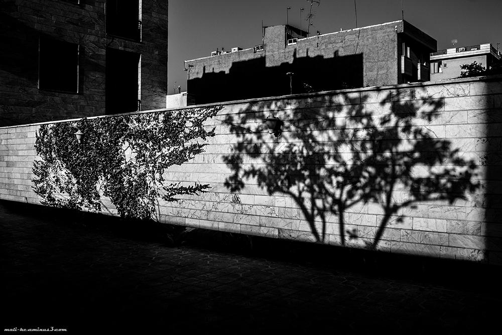 من ، سایه یک درختم