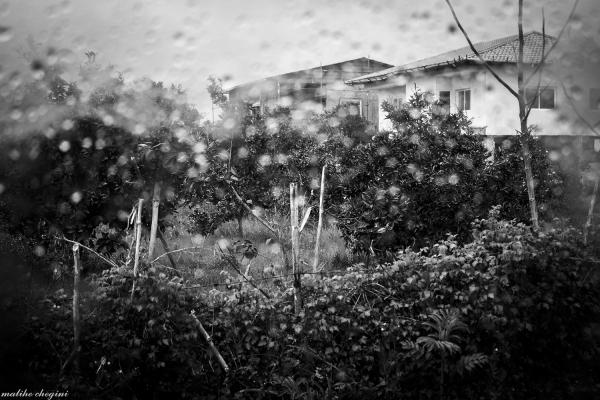 باران ، اشکی بود که تصویر خانه ات را تار می کرد