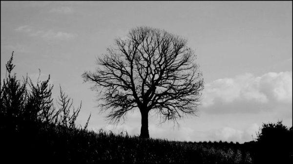 Walnuttree