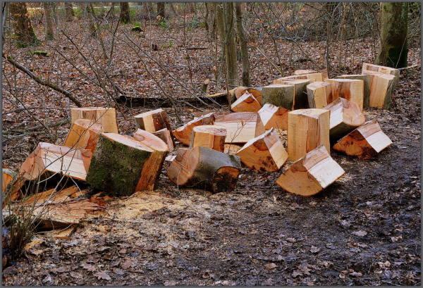 Who needs firewood … ??? !!!