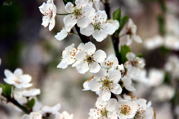 دل  خوشم به این شکوفه ها، به بهار