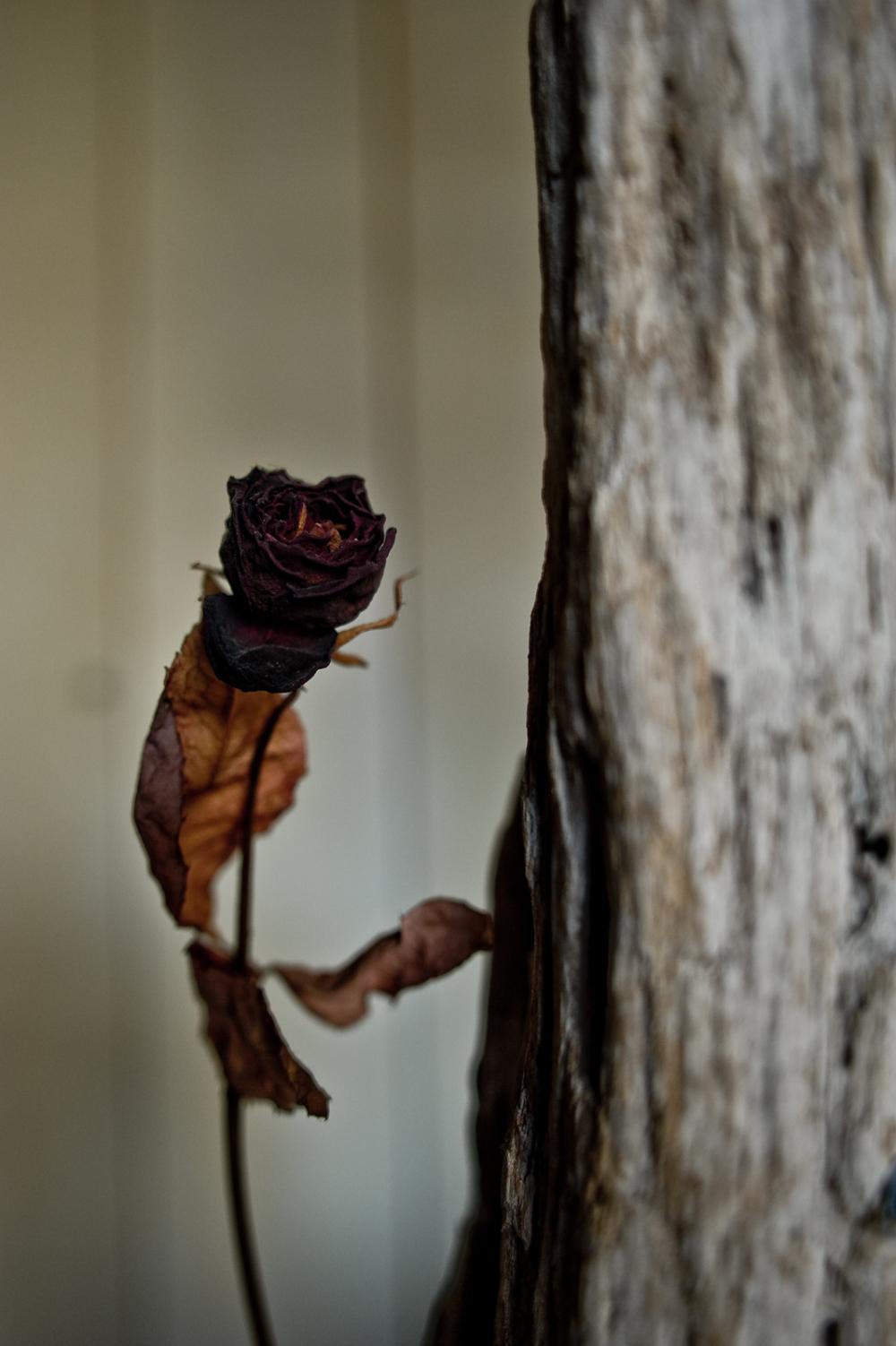 a dead flower