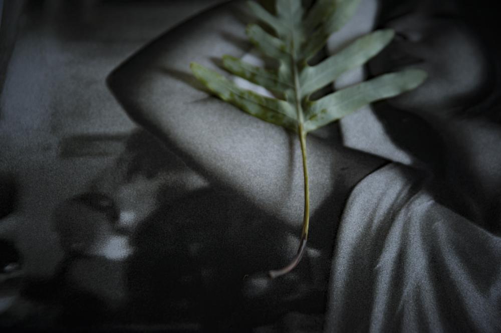 still life (arms)