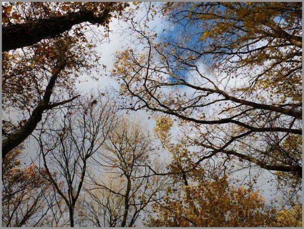 ciel, branches