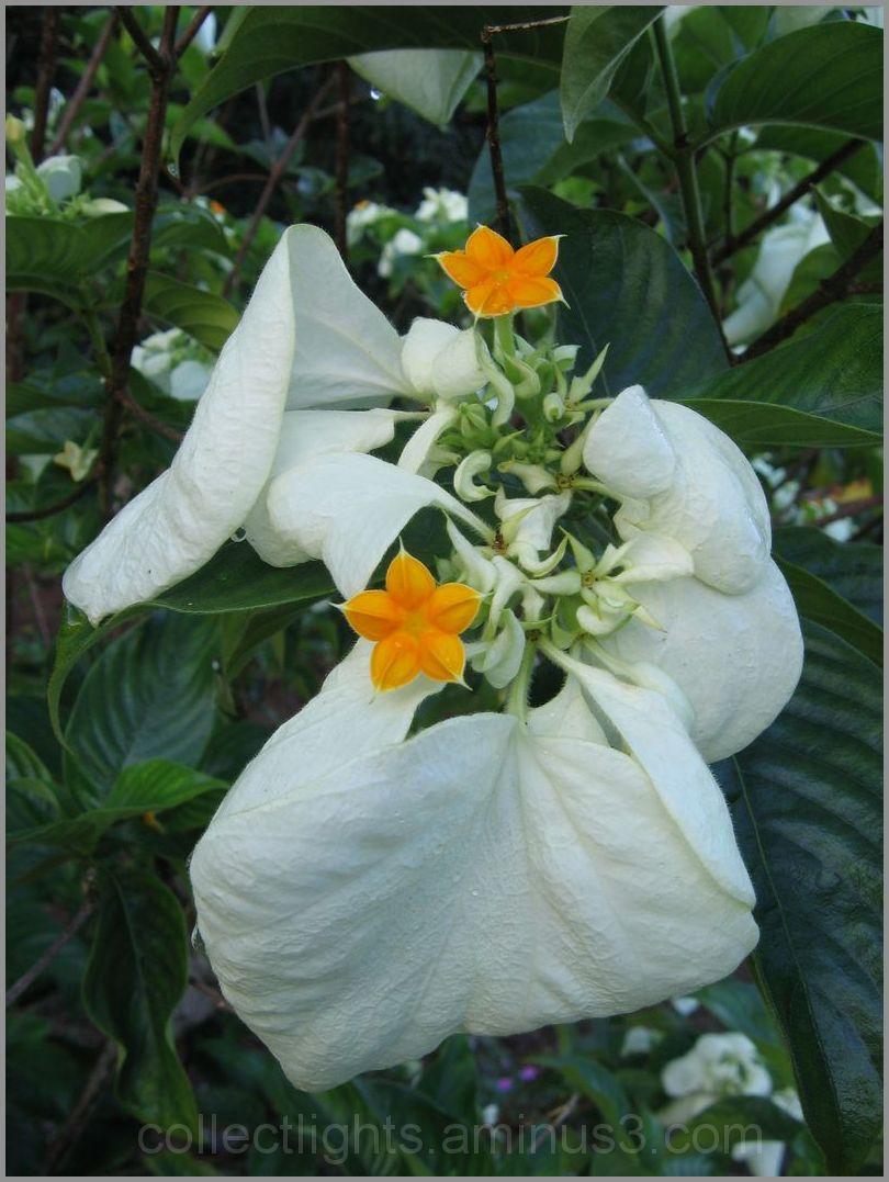 Petites fleurs orange dans langes blancs