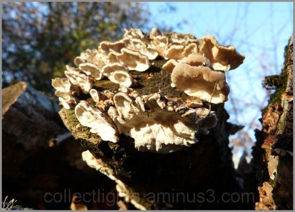 Bouquet rond de champignons