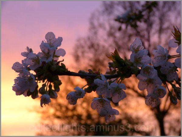 Soir de printemps