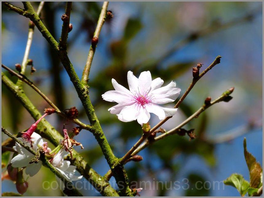Au moins une fleur dans l'arbre...