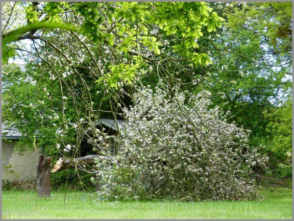 Les dégâts du vent de printemps !