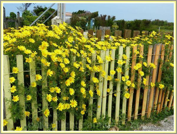 Fleurs en cage
