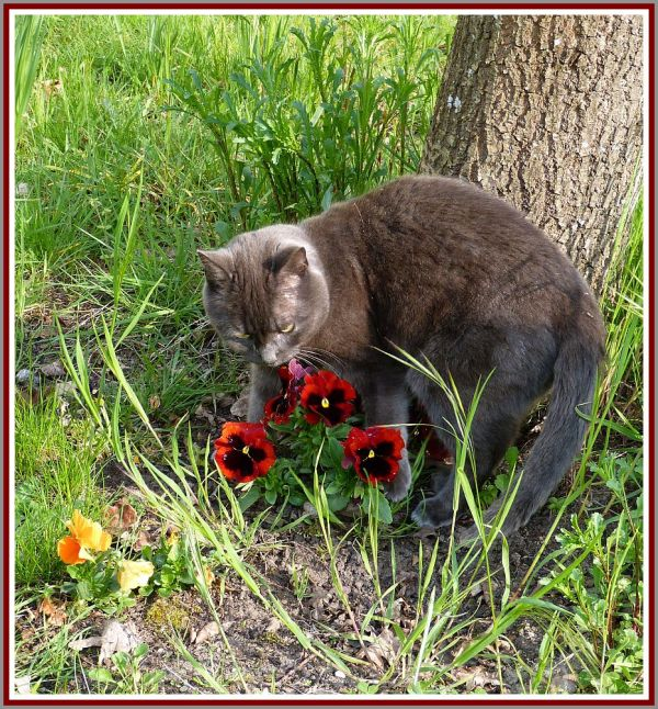 Le chat qui aimait les fleurs !