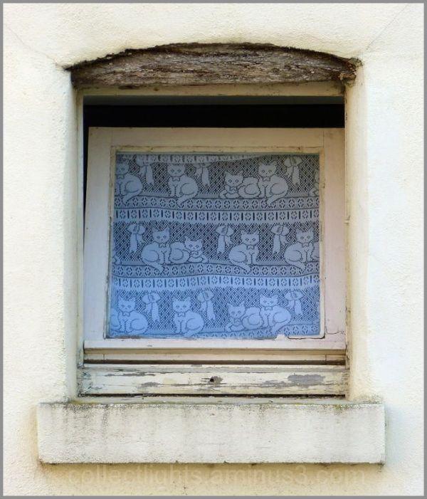 Fenêtre chatière