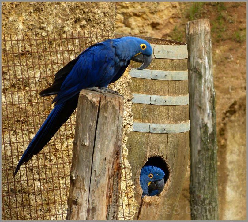 Plumage bleu et paire d