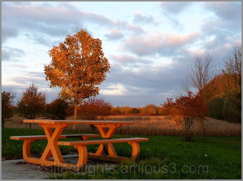 Invitation à pique-niquer en automne