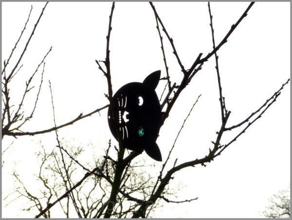 Un clin d'oeil du chat