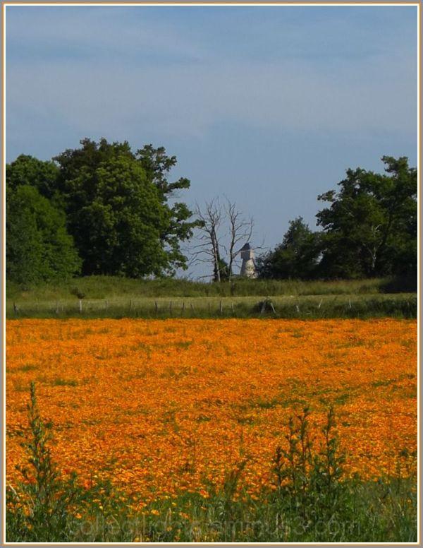 Prairie fleurie en juin