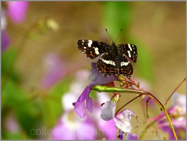 Au jardin de fleurs, le papillon s'est posé !