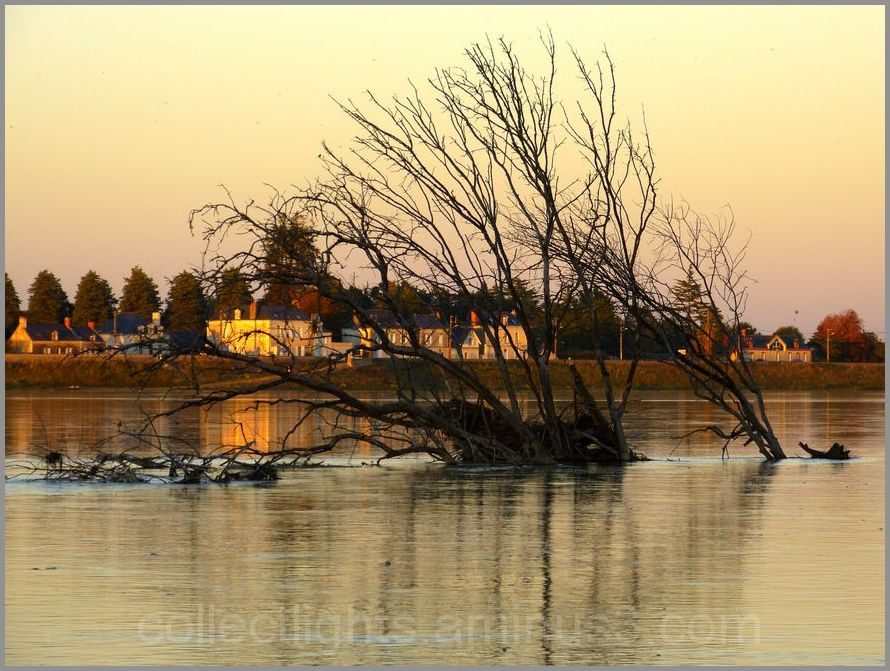 La Loire charrie les arbres