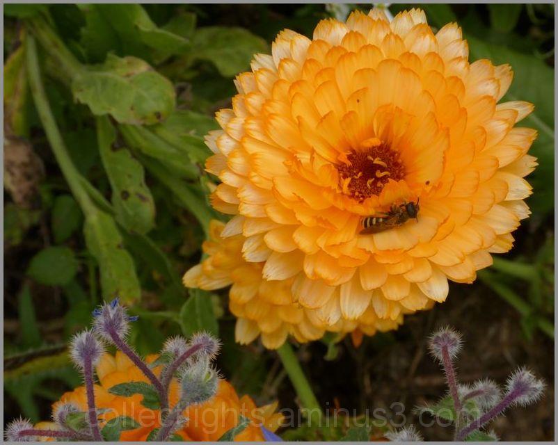Les visiteurs des fleurs 2/...