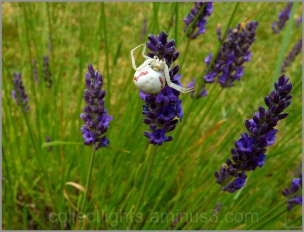 Les visiteurs des fleurs 6/...