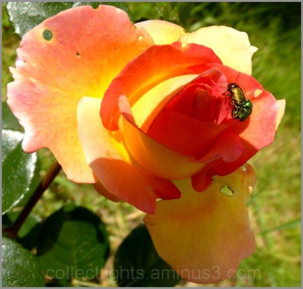 Les visiteurs des fleurs  7/...