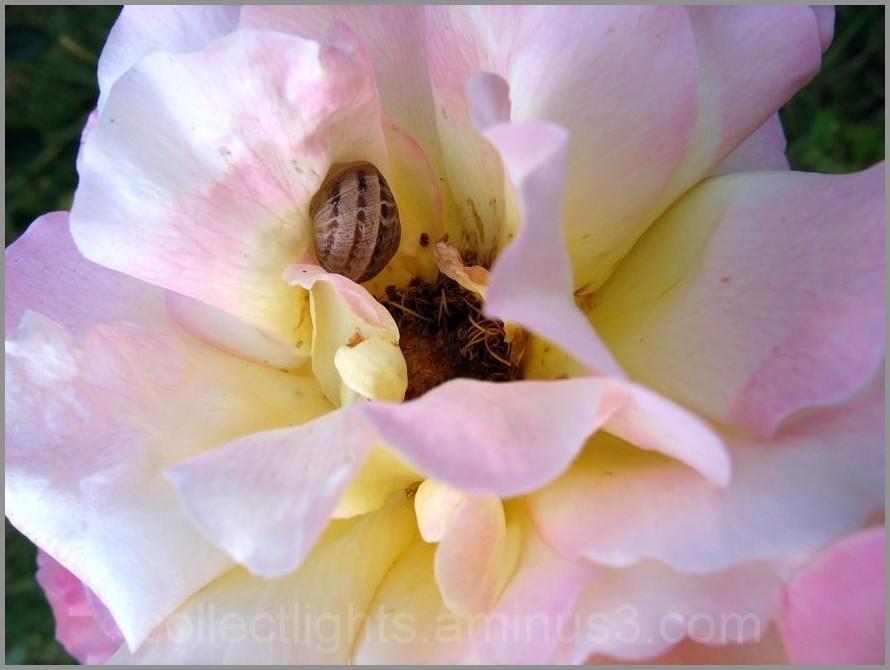 Les visiteurs des fleurs  11/...