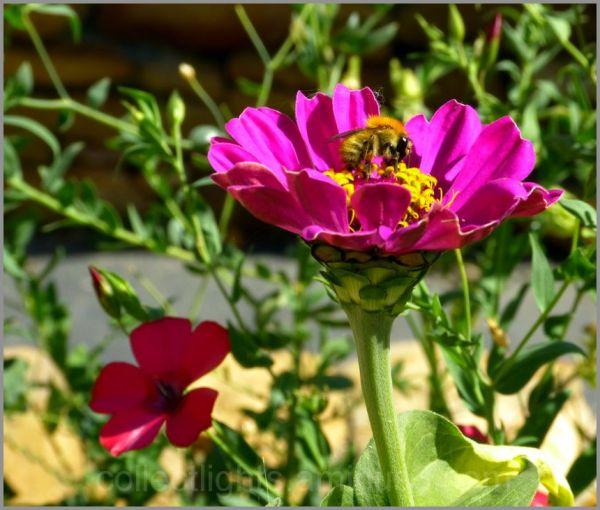 Les visiteurs des fleurs  13/...