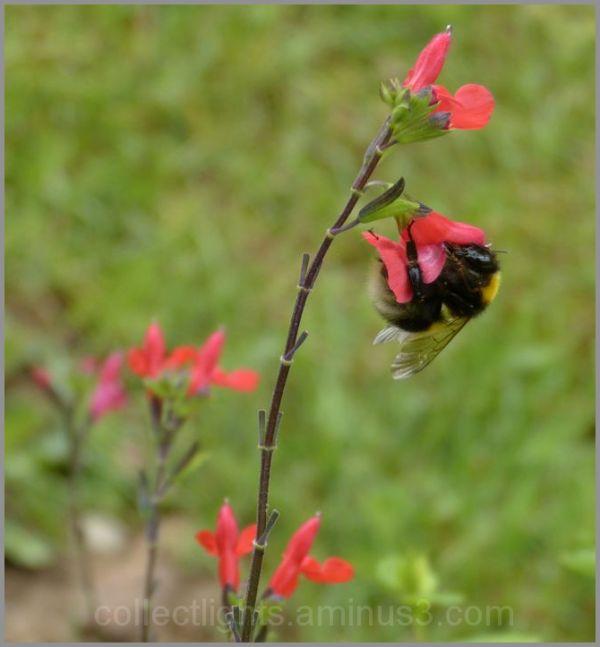 Les visiteurs des fleurs 25/...