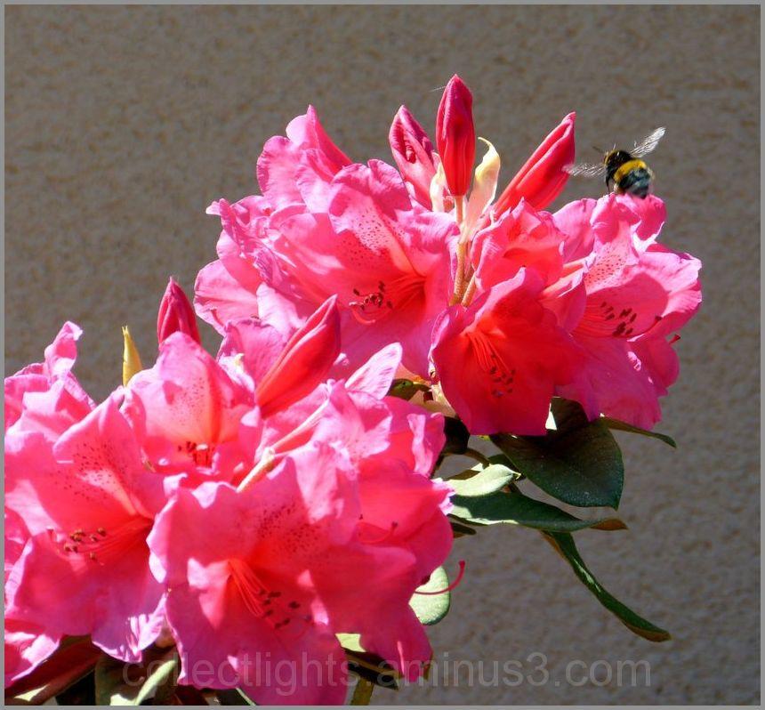 Les visiteurs des fleurs  16/...