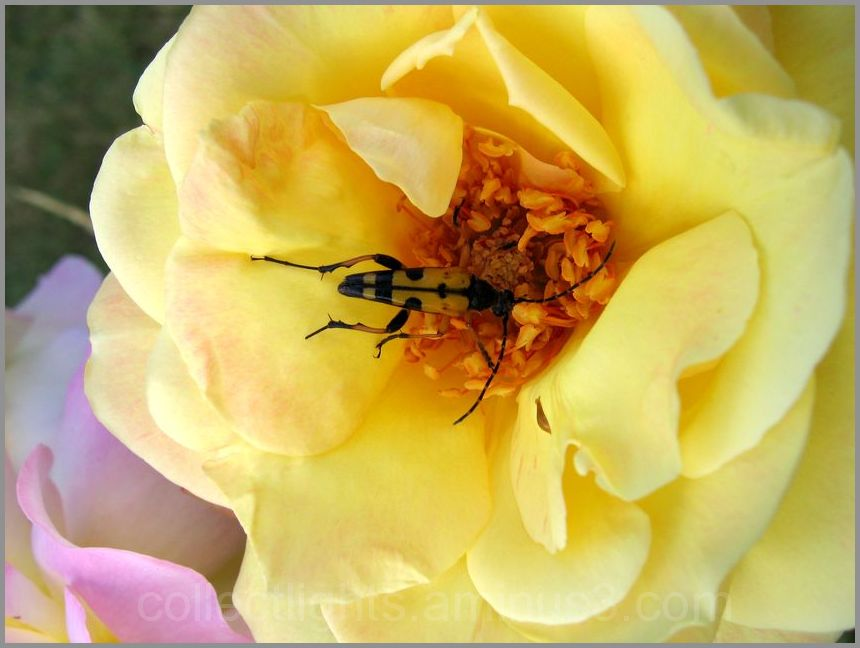 Les visiteurs des fleurs  29/...