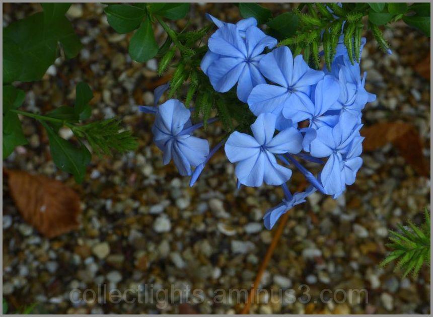Fleur bleue sous les arbres
