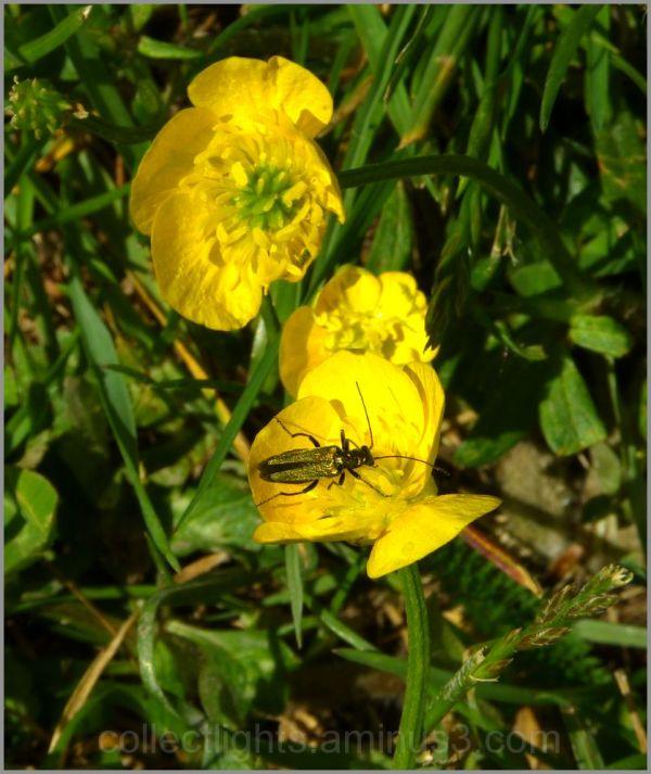 Les visiteurs des fleurs 34