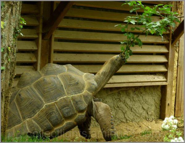 Un saut de tortue gourmande