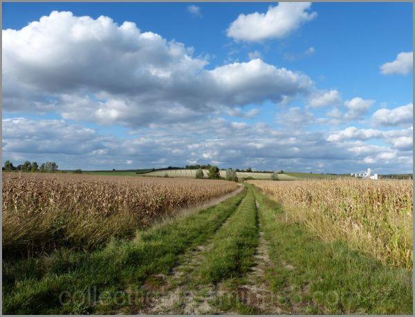 Chemin à travers champs