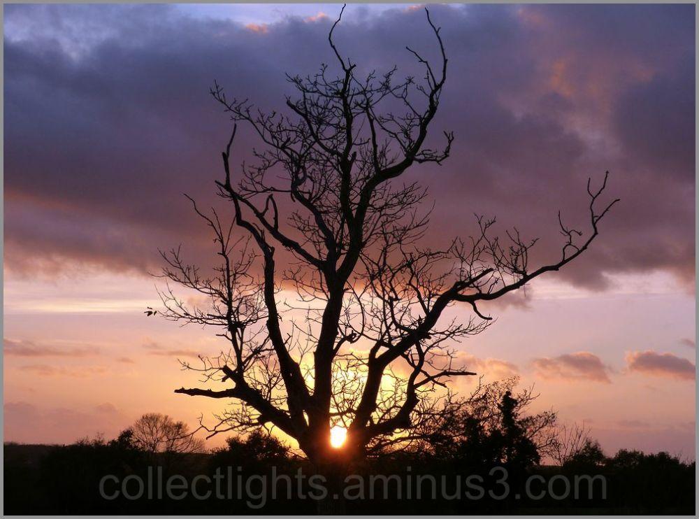 L'arbre offre un nid au soleil 2/2