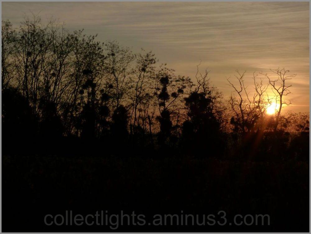 Le soleil comme éclaireur de la colonne en marche